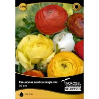 Bulbi Ranunculus mix 10